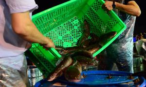 [XKLĐ ĐÀI LOAN] Tuyển 08 nữ làm đóng gói thực phẩm tại nhà máy Hồng Vĩ CAO HÙNG 2020 16