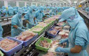 [XKLĐ ĐÀI LOAN] [CLIP] thực hành lọc thịt gà – Thi tuyển đơn hàng chế biến thực phẩm ở Nhật Bản 2020 6