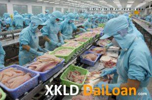 [XKLĐ ĐÀI LOAN] [CLIP] thực hành lọc thịt gà – Thi tuyển đơn hàng chế biến thực phẩm ở Nhật Bản 2020