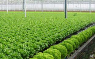 [XKLĐ ĐÀI LOAN] CLip – tìm hiểu sự thật về hợp tác xã làm nông nghiệp ở  Đài Loan 2020 10