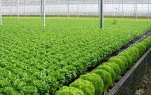 [XKLĐ ĐÀI LOAN] Clip Vườn dâu tây tuyệt vời – mô hình trồng rau Nhật Bản tiên tiến 2020 41