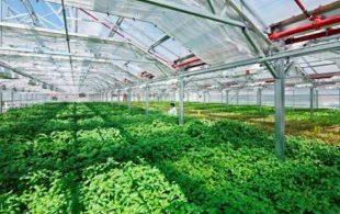 [XKLĐ ĐÀI LOAN] Clip – đáng kinh ngạc với cách áp dụng tự động hóa vào trồng rau ở Nhật 2020 5