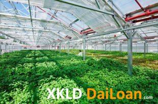 [XKLĐ ĐÀI LOAN] Clip – đáng kinh ngạc với cách áp dụng tự động hóa vào trồng rau ở Nhật 2020