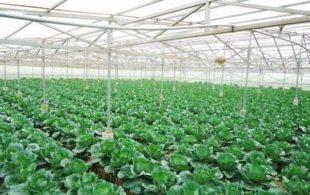 [XKLĐ ĐÀI LOAN] Clip Làm thế nào để ứng dụng công nghệ nông nghiệp Nhật Bản vào Việt Nam? 2020 38