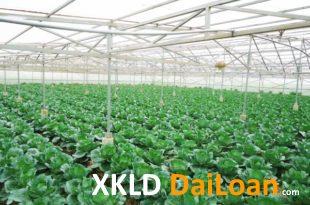 [XKLĐ ĐÀI LOAN] Clip Làm thế nào để ứng dụng công nghệ nông nghiệp Nhật Bản vào Việt Nam? 2020
