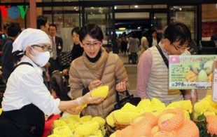[XKLĐ ĐÀI LOAN] Clip Trồng rau trong nhà kính – sướng như làm nông nghiệp tại Nhật Bản 2020 12