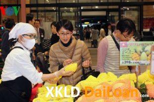 [XKLĐ ĐÀI LOAN] Clip Trồng rau trong nhà kính – sướng như làm nông nghiệp tại Nhật Bản 2020