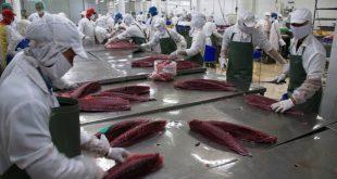 [XKLĐ ĐÀI LOAN] Tuyển 40 nữ thực phẩm nhà máy Đỉnh Thắng Đài Bắc 2020